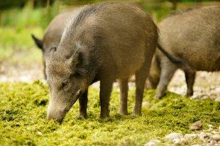 Zgłaszanie szkód wuprawach ipłodach rolnych wyrządzonych przez dziką zwierzynę